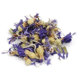 Albastrele flori plante uscate
